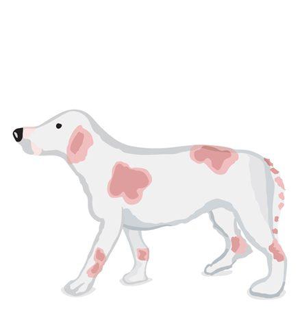 Watercolour Illustration of a Beagle